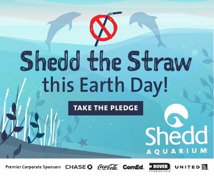 Chicago Chalk Champ, Shaun Hays will be chalking amazing sea life pictures for Shedd Aquarium's Earth Day Promotions: April 8, 2017 at Navy Pier and April 22nd between Field Museum and Shedd Aquarium.
