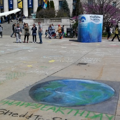 Chicago Chalk Champ - Shaun Hays leads a pop-up Chalk Art Fest on the Lakefront - Shedd Aquarium Promo for Earth Day 2017